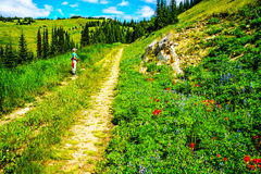 Senior Woman enjoying the View on Tod Mountain during a hike in the Shuswap Highlands. Of British Columbia, Canada stock photo