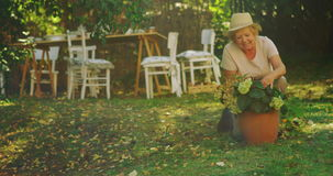 Senior woman examining pot plant in garden