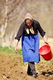 Senior woman farmer sowing. Old farmer woman sowing seeds mixed with fertilizer from a bucket Stock Image