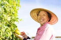 Senior woman farmer working in vegetable farm Stock Image