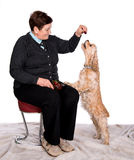 Senior woman feeding spaniel Royalty Free Stock Photography