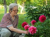 Senior Woman and Flowers Royalty Free Stock Photography