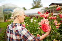Senior woman with flowers at summer garden Stock Photos