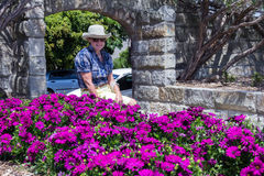 Senior woman flowers Royalty Free Stock Image
