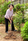 a senior woman in the garden royalty free stock photo