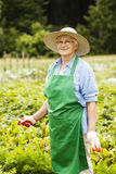 Senior woman in garden Royalty Free Stock Photo