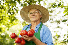 Senior woman in garden Royalty Free Stock Image