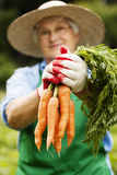 Senior woman in garden Stock Photography