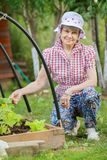 Senior woman at garden bed of cucumber Royalty Free Stock Photos