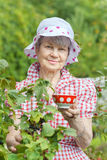 Senior woman in garden standing near bushes of black currant Royalty Free Stock Images