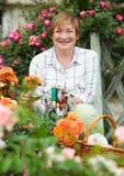 Senior woman gardener yellow flowers Royalty Free Stock Photography
