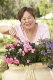 Senior Woman Gardening. Smiling To Camera Stock Photography