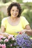 Senior Woman Gardening. Senior Hispanic Woman Gardening Smiling To Camera Royalty Free Stock Images