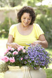 Senior Woman Gardening. Senior Hispanic Woman Gardening Smiling To Camera Royalty Free Stock Image