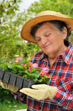 Senior woman - gardening Royalty Free Stock Image
