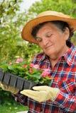 Senior woman - gardening royalty free stock image