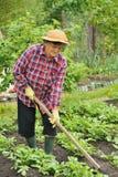 Senior woman gardening Royalty Free Stock Photography