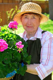 Senior woman gardening. Senior woman holding a pot with flowers in her garden stock images