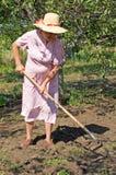 Senior woman gardening. In her garden Royalty Free Stock Image