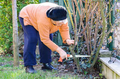Senior woman gardening in backyard Stock Photo