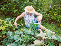 Senior woman gardening among the flower beds Royalty Free Stock Image