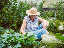 Senior woman gardening among the flower beds Royalty Free Stock Photo