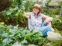 Senior woman gardening among the flower beds Royalty Free Stock Photos