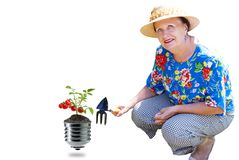 Gardening fresh vegetables on green clean energy royalty free stock photos