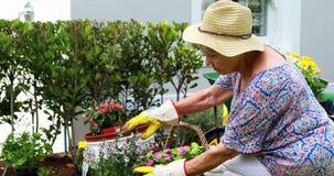 Senior woman gardening in the garden. Smiling senior woman gardening in the garden stock video