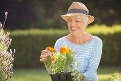 Senior woman gardening. Happy senior woman gardening in backyard Royalty Free Stock Image