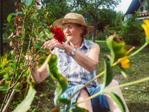 Senior woman is gardening in her garden Royalty Free Stock Photo
