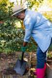 Senior woman gardening at the park. On a sunny day Stock Photos