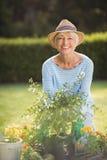 Senior woman gardening. Portrait of happy senior woman gardening in backyard Royalty Free Stock Photo