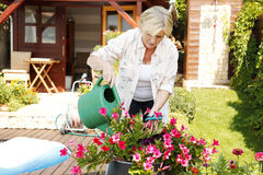 Senior woman gardening. Portrait of senior woman gardening at home. Retired female cares of plants while standing in her beautiful garden Royalty Free Stock Photo