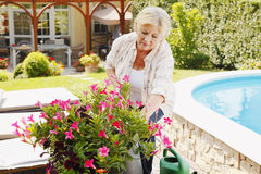 Senior woman gardening. Portrait of senior woman gardening at home. Retired female cares of plants while standing in her beautiful garden Stock Photos