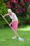 Senior woman gardening. Senior retired woman gardening raking lawn Royalty Free Stock Image