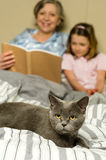 Senior woman and granddaughter reading with cat. Senior women and granddaughter reading lying in bed with cat Stock Photo