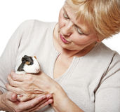 Senior woman  with guinea pig - pet therapy Stock Photo