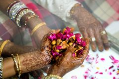 Senior woman with henna tattoos on both hands holding pink flowers and herbs soaked in milk for a couple. royalty free stock image