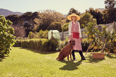 Senior woman in her backyard with faithful pet dog. Full length portrait shot from a low angle of a smiling senior woman, looking at the camera with her faithful Royalty Free Stock Images