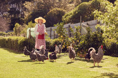 Senior woman in her backyard with free range chickens. Full length shot of a smiling senior woman in hat and apron, standing in her backyard with a group of Stock Images
