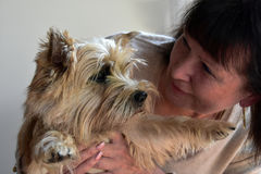 Senior woman and her dog. Senior woman cuddles with young cairn terrier Stock Photo