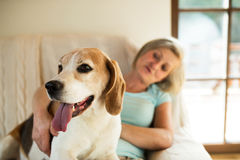 Senior woman with her dog at home relaxing. Beautiful senior woman with her dog at home sitting on couch, relaxing Royalty Free Stock Images