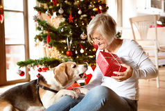 Senior woman with her dog opening Christmas presents. Stock Image