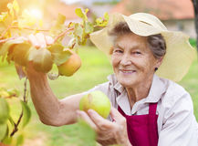 Senior woman in her garden Royalty Free Stock Photography