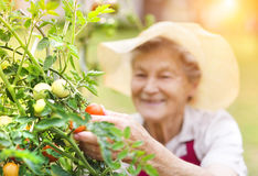 Senior woman in her garden royalty free stock photos