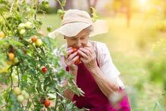 Senior woman in her garden Stock Images
