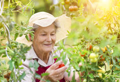 Senior woman in her garden Royalty Free Stock Images