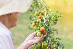 Senior woman in her garden Stock Photos