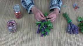Senior woman herbalist hands binding fresh anise hyssop bunch for dry stock video